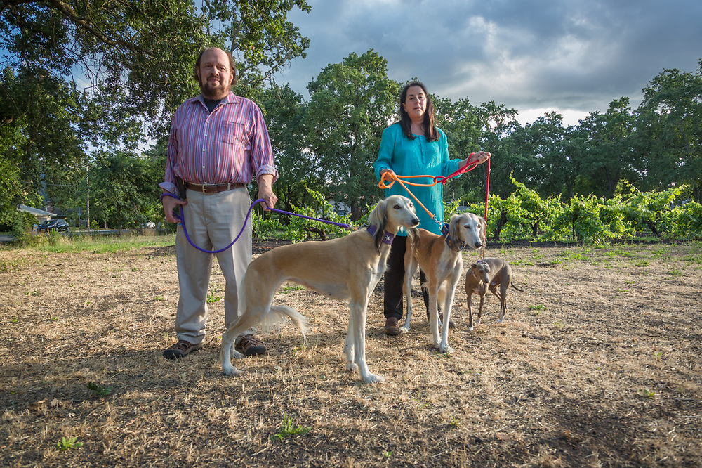 """I was recently attached by a pitbull.  Eventually I let my dogs loose and they all quickly out-ran the pitbull.  We're all still very nervous.""  Lesley Bursten walks with her husband, Stuart, and their two Salukis, Gabby and Mira, and Italian Greyhound, Bernard, near Lake Street in Calistoga"