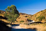 San Francisquito Canyon