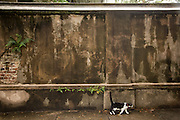 A cat walks past an old wall on Legare Street in Charleston, SC.
