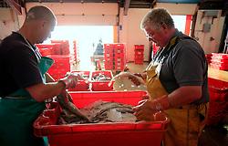UK CORNWALL NEWLYN 10JUN08 - Cornish fishermen sort through a box of feshly landed catch at Newlyn harbour in Cornwall, western England...jre/Photo by Jiri Rezac / WWF UK..© Jiri Rezac 2008..Contact: +44 (0) 7050 110 417.Mobile:  +44 (0) 7801 337 683.Office:  +44 (0) 20 8968 9635..Email:   jiri@jirirezac.com.Web:    www.jirirezac.com..© All images Jiri Rezac 2008 - All rights reserved.
