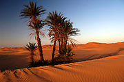 Morocco: Merzouga Dunes