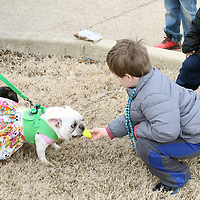 Libby Ezell | BUY AT PHOTOS.DJOURNAL.COM<br /> Landon George, 6, plays with Jelly Bean and Cricket Peters at Saturday's Krewe of Barkus Dog Parade