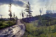 Sur la route de FAiry Lake, Montana // On the road of Fairy lake, Montana, USA