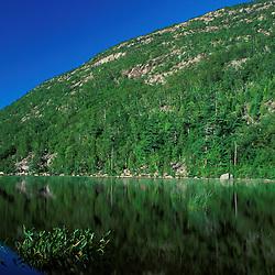 Acadia National Park, ME. The Tarn. Dorr Mountain. Pickerelweed, Pontederia cordata, in a glacial tarn.