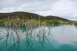 Mangroves reflected in calm water in the Kimberley wet season in Dugong Bay.