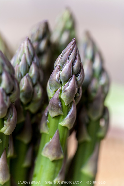 Fresh, bright green asparagus spears showing a hint of purple at the tips