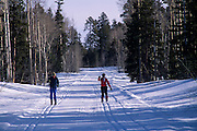 Cross-country skiers, Dog Ridge Trail, North Rim Nordic Ctr., Grand Canyon National Park, Arizona..Media Usage:.Subject photograph(s) are copyrighted Edward McCain. All rights are reserved except those specifically granted by McCain Photography in writing...McCain Photography.211 S 4th Avenue.Tucson, AZ 85701-2103.(520) 623-1998.mobile: (520) 990-0999.fax: (520) 623-1190.http://www.mccainphoto.com.edward@mccainphoto.com.
