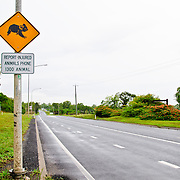 Warning sign on the side of the road warning of Koala crossing