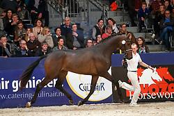 414, Knock-Out<br /> KWPN Stallionshow - 's Hertogenbosch 2018<br /> © Hippo Foto - Dirk Caremans<br /> 03/02/2018