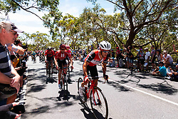 January 20, 2019 - Adelaide, South Australia, Australia - Richie Porte, Team Trek Segafredo, on the first scent up Willunga Hill,Stage 6 of the Tour Down Under, Australia on the 20 of January 2019  (Credit Image: © Gary Francis/ZUMA Wire)