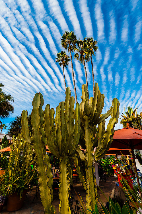 Cactus with unusual cloud formations above, Casa de Reyes Restaurant, Old Town, San Diego, California USA.