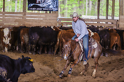 May 20, 2017 - Minshall Farm Cutting 3, held at Minshall Farms, Hillsburgh Ontario. The event was put on by the Ontario Cutting Horse Association. Riding in the 2,000 Limited Rider Class is James Cook on Dual Peps Tom Cat owned by the rider.