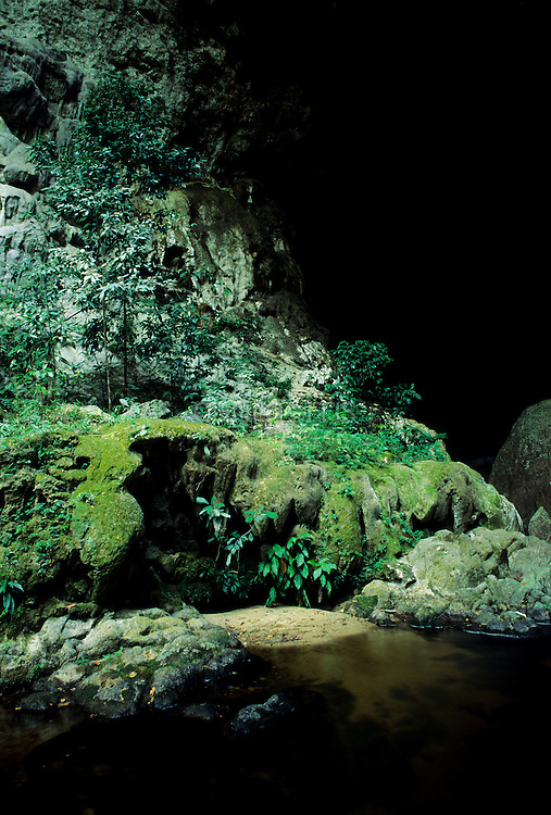 Lush, green foliage guards Rio Om cave entrance, San Ignacio, Belize