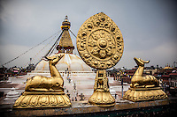 Dharma Wheel & Deer of a monastery opposite the Boudhanath Stupa, Kathmandu, Nepal.