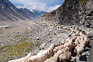 Moving the herds in Spiti Valley.