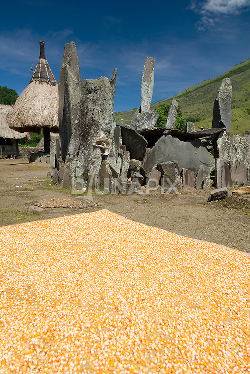 Corn drying near megaliths, Bena Village, Bajawa, Flores