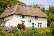 Pretty thatched whitewashed cottage house for sale, Porthoustock, Lizard Peninsula, Cornwall, England, UK