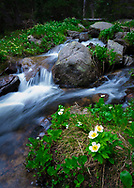 A picture of some flowers next to a gentle spring stream.<br />