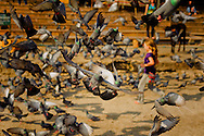 a young tourist girl running to afraid pigeon on pushkar ghats, india
