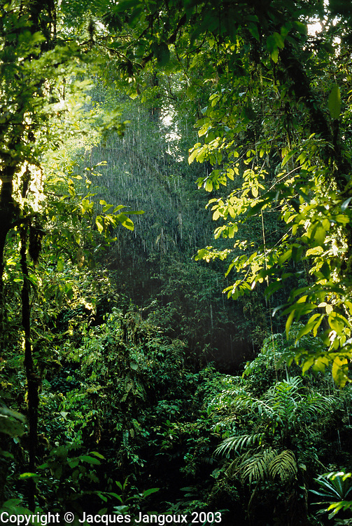 Begining of tropical rainstorm in rainforest in Choco Department, Colombia.