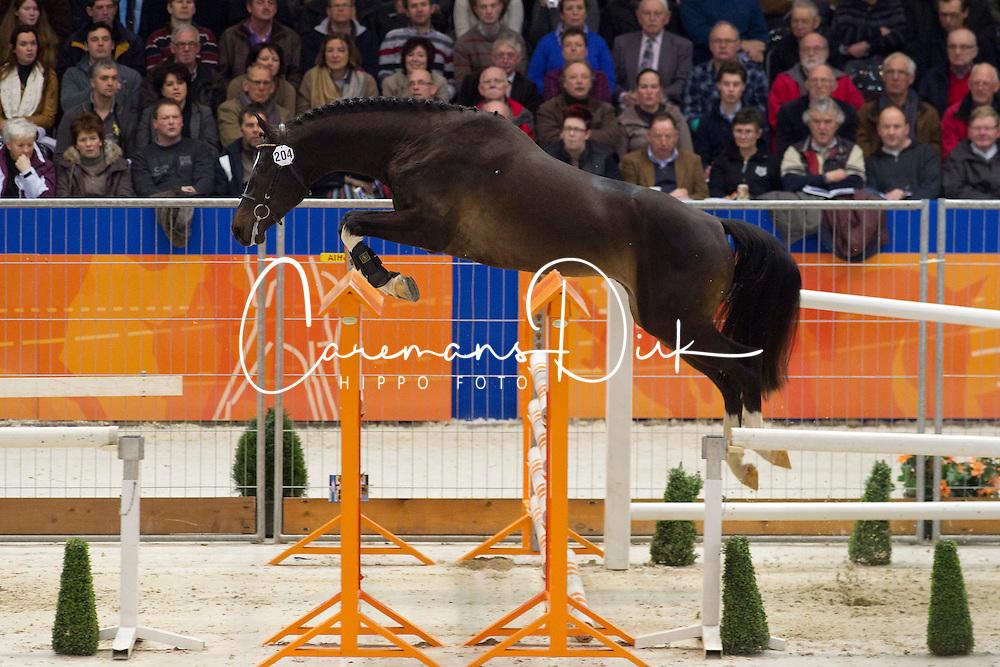 204 - Empire N<br /> KWPN Hengstenkeuring - 's Hertogenbosch 2012<br /> © Dirk Caremans