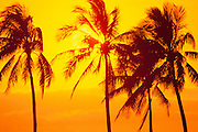 Sunset, Palm Trees, Hawaii<br />