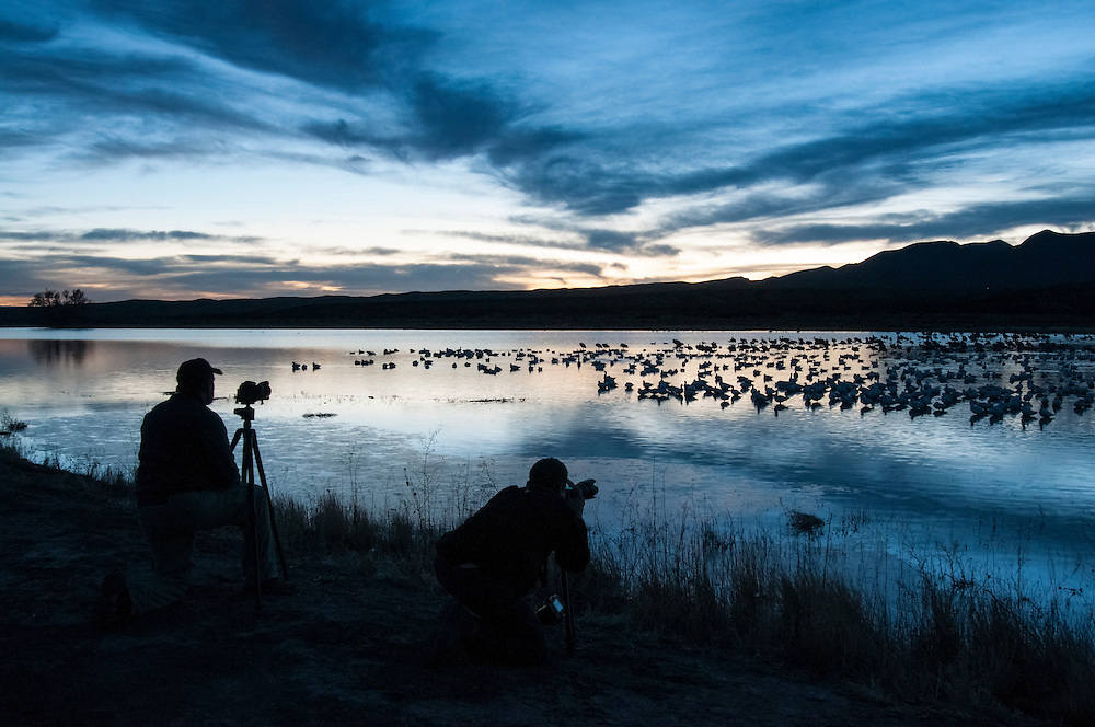 Photographer, Snow Geese, Chen caerulescens, Bosque del Apache NWR, New Mexico