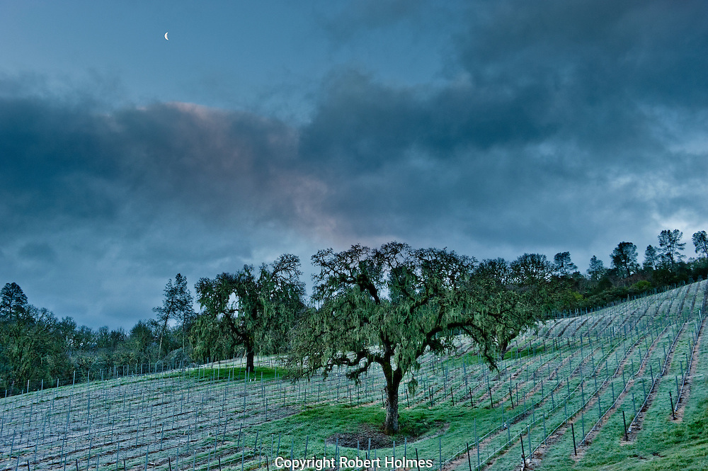 Early morning frost on Somerston Estate vineyards, Napa Valley