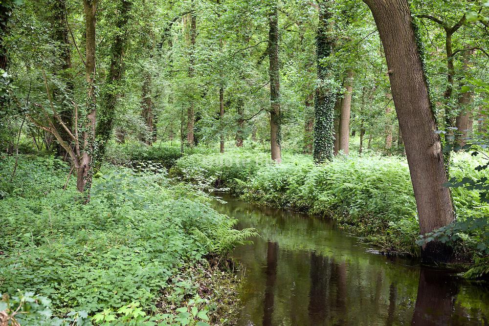 idyllic nature