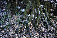 Tree roots in forest in Ordesa y Monte Perdido National Park, Spain