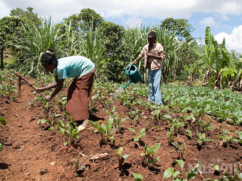 Tigist (right), 10, and her sister Elile Banga (left) , 15, working in the garden at their home in Boreda, Ethiopia. Tigist's favourite vegetable is cabbage.