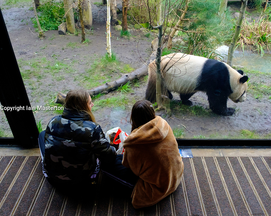 Visitors watch Giant panda male Yang Guang at Edinburgh Zoo, Scotland, UK