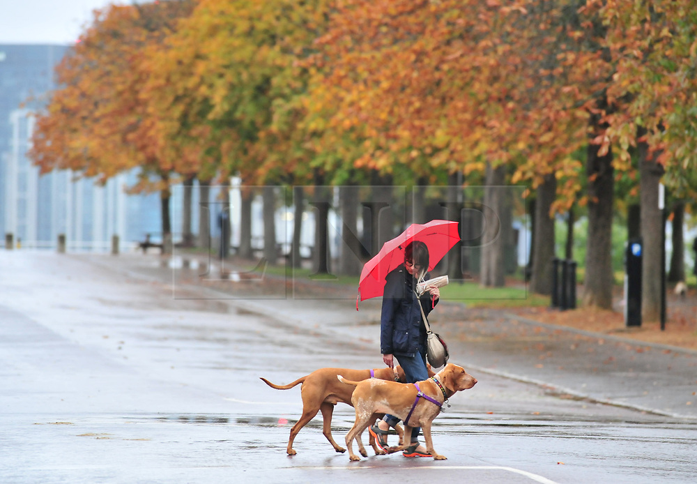 © Licensed to London News Pictures. 14/10/2018<br /> GREENWICH, UK.<br /> A lady walking her dogs with an umbrella up.<br /> Wet weather morning in Greenwich Park, Greenwich as Storm Callum hits the UK.<br /> Photo credit: Grant Falvey/LNP