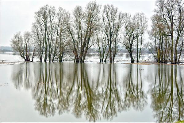 Nederland, Nijmegen, 12-1-2018Het hoogwater, hoge water, trekt veel nieuwsgierigen en andere dagjesmensen naar de Ooijpolder en levert schilderachtige beelden op. Foto: Flip Franssen