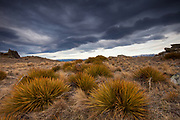 Wild Spaniard, tussock grass and granite tor landscape, wind cloud over Blackstone Hill, Central Otago