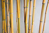Chinese Garden Bamboo at The Huntington, San Marino, California