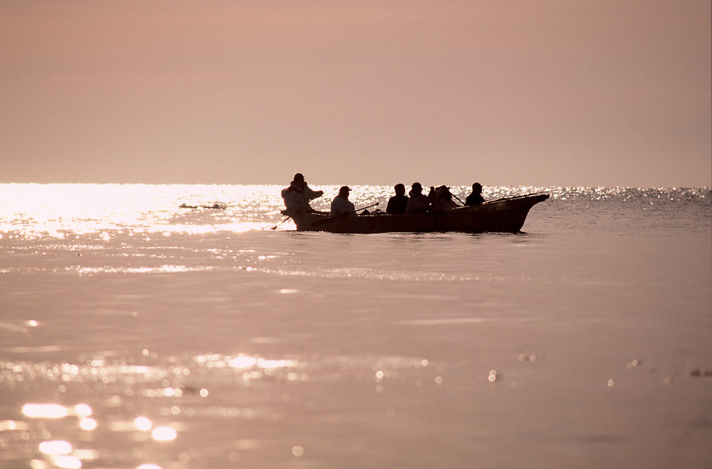Native whaling crew paddling a traditional umiak on the hunt for bowhead whales in the Chukchi Sea at sunset