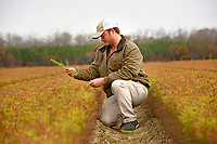 International Forest Company nursery technician and NC State alumnus Rhodes Kelly looks over lobolly pine seedlings at the company's nursery outside Washington.