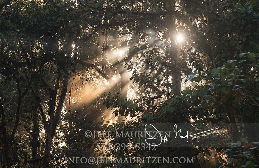 Sun rays filter through the early morning mist in the Mindo-Nambillo cloud forest of Ecuador.