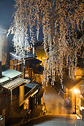 A cherry tree (sakura) in perfect full bloom at night in Gion