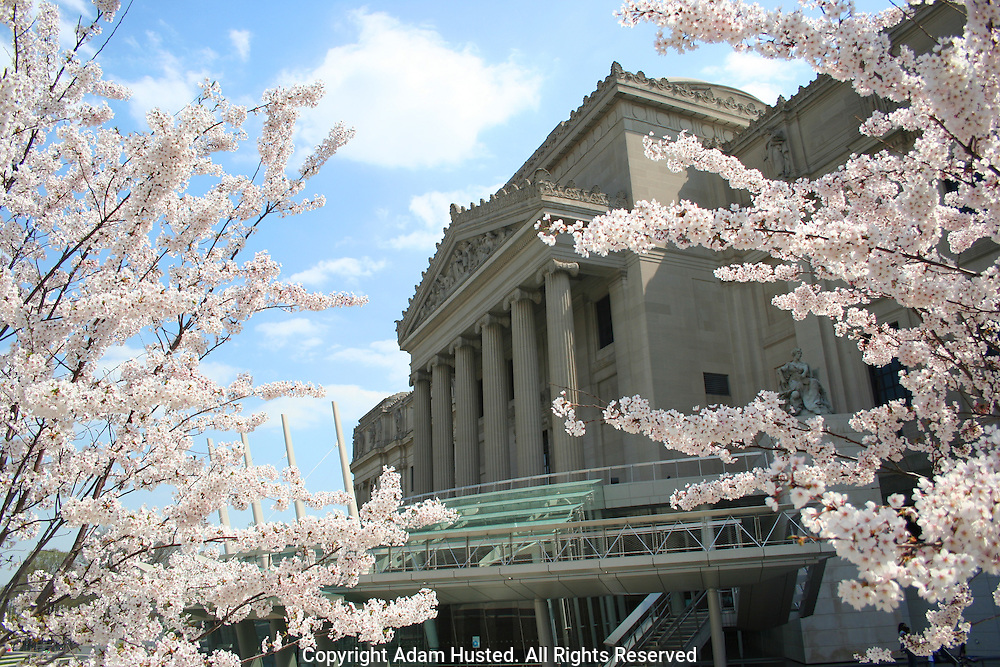 Brooklyn Museum with Cherry Blossoms. Photo © Adam Husted