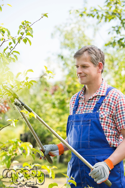 Gardener clipping tree branches at plant nursery