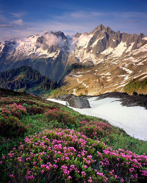 Eldorado Peak and meadows of pink mountain heather, North Cascades National Park Washington USA