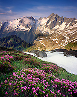 Eldorado Peak and meadows of pink mountain heather, North Cascades National Park Washington USA