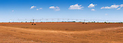 Mobile lateral move irrigation boom system on red soil near bundaberg, Queensland, Australia
