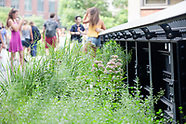 High Line - Touring Summer Plants