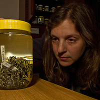 National Geographic writer Jennifer Holland stares into a jar of preserved, unnamed harlequin frogs in the lab of Coloma and Ron in Quito.
