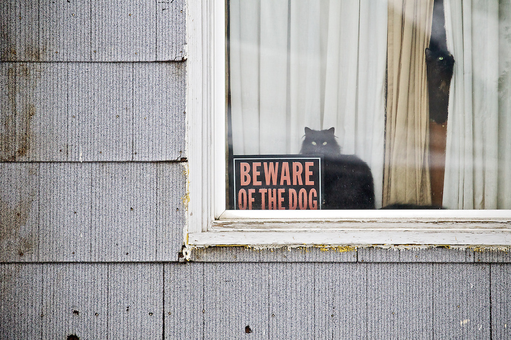 A pair of cats take over for the watch dog as they keep a lookout on the front yard of their owner's home Thursday on the 900-block of Sixth Street in Coeur d'Alene.