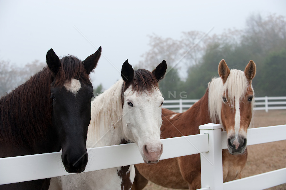 Black White and Brown Horse along a white fence