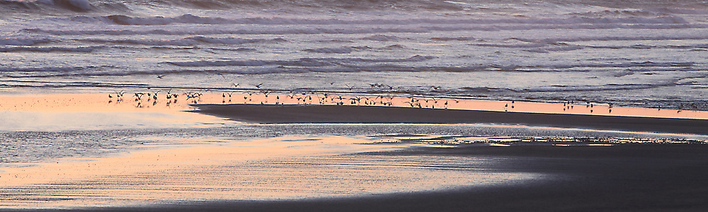 Birds in Pacific Sunset